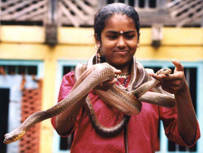 Nagpanchami at Shirala